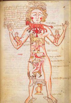 Zodiac Man, 15th century
