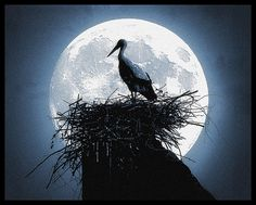 Full Moon through the birds nest