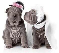 One word! Cute!  #wedding #love #weddingideas #pets #petsinweddings #mustlovedogs