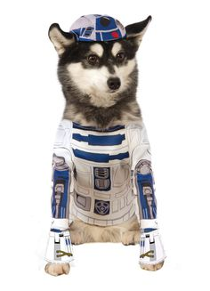 Amazon.com : Star Wars R2-D2 Pet Costume : Pet Supplies