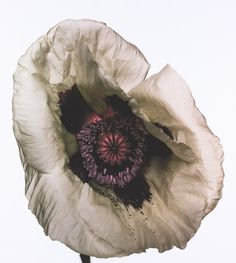 poppy-barr-s-white-.-new-york-1968-c-the-irving-penn-foundation