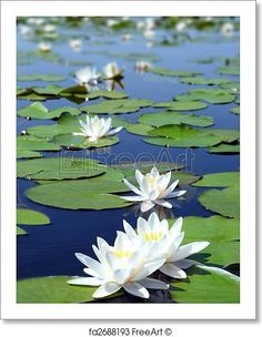 Free art print of Summer lake with water-lily flowers