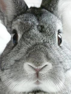 Cute rabbit :3
