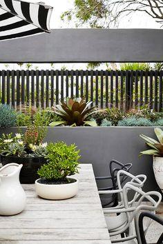 Vertical Gardens A rooftop garden in Bondi. Rooftop Garden, Balcony Garden, Small Gardens, Outdoor Gardens, Vertical Gardens, Small Garden Design, Fence Design, Patio Design, Garden Projects