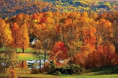 East Coast for the Fall Foliage (New England)