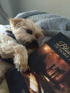 My Books, Dogs, Animals, Animales, Animaux, Pet Dogs, Doggies, Animal, Animais