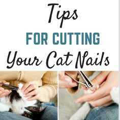 Learn how to cut your cat's nails safely. Don't be afraid check our our tips to cutting your cat's nails without stress. Dyi Cat Bed, Purebred Cats, Cat Biting, Cat Toilet Training, Cut Cat, Cat Nails, Cat Care Tips, Cat Grooming, Pet Health