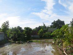 1/18(水)バリ島ウブドのお天気は晴れ。室内温度27.7℃、湿度79%。雨が続く毎日ですが、今日は美しい青空!田植え日和ですね~♪