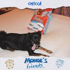 Chicca #Mongesfriends