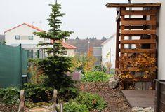 Vysněná zahrada: Dřevo na topení v zahradě Outdoor Firewood Rack, Plants, Instagram, Firewood, Plant, Planets