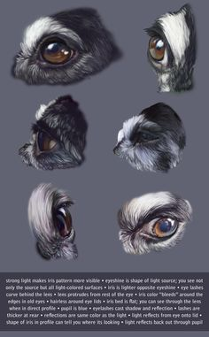 Dog Eye Studies with Notes by *KlakKlak on deviantART.  Animal Anatomy Artist Reference.
