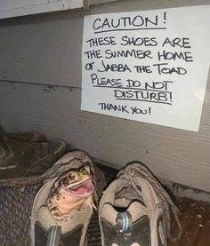 He's so happy in his Summer Home Shoe Funny Animal Memes, Funny Animal Pictures, Cute Funny Animals, Cat Memes, Funny Dogs, Funny Memes, Animal Funnies, Animal Pics, Funny Photos