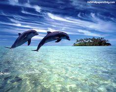 Wal Lederstuhl Inspiriert Meer | 20 Besten Dolphins Bilder Auf Pinterest Delphine Wale Und