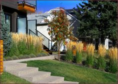 Repeating clumps of Calamagrostis acutiflora 'Karl Foerster' direct and reinforc. - Repeating clumps of Calamagrostis acutiflora 'Karl Foerster' direct and reinforce movement in two directions. Driveway Landscaping, Modern Landscaping, Landscaping Plants, Creative Landscape, Landscape Design, Garden Design, Italian Patio, Feather Reed Grass, Blue Fescue