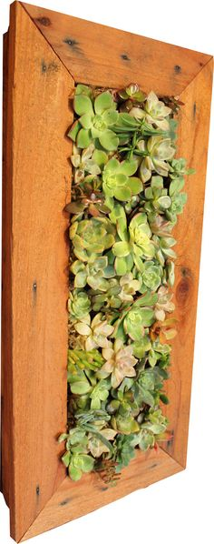 100% Handmade Living Succulent Wall. Hang it inside or outside ...
