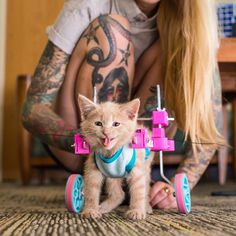 Chloe is making great progress, here she is after being fitted with wheels to help with her mobility.