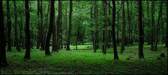 czech republic bohemia forest | Czech Republic: a journey through Bohemia | Advisor Travel Guide