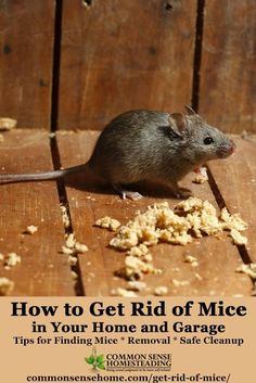 How to Get Rid of Mice In Your House and Garage - Tips for keeping mice out of the house, catching mice and safe cleanup of rodents, urine and droppings. Termite Control, Pest Control, Mice Removal, Natural Spider Repellant, Getting Rid Of Rats, Dead Mouse, Mice Repellent, Get Rid Of Spiders, Animals
