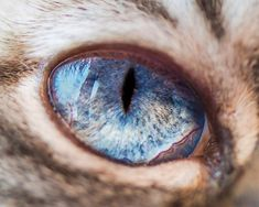 The Captivating Eye of a Cat by Andrew Marttila. l #photography #cats #eye