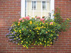 images window boxes   Gardening/Inspirace truhlíky