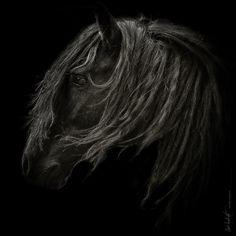www.pegasebuzz.com   Equestrian photography : Javi Inchusta.