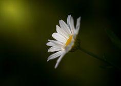 Paul Barson Photography » Time To Shine