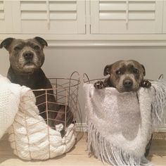 Har du en dålig dag? De här två hundarna kommer garanterat få dig att må bättre.