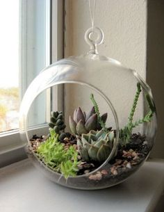 The idea is to design and build your own tiny succulent garden and either set it on a sunny windowsill (it has a flat bottom) or hang it in a window.