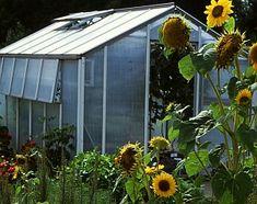 Kleingewächshaus im Garten