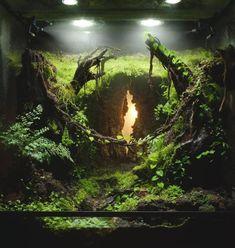 Hazy Denizens Platz im weltweiten Vivarium Contest IVLC – aquascaping Planted Aquarium, Aquarium Aquascape, Aquarium Landscape, Nature Aquarium, Aquarium Fish Tank, Fish Tanks, Gecko Vivarium, Gecko Terrarium, Terrarium Reptile