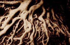 Con vegetales de raíces más hondas, habría menos CO2 en la atmósfera