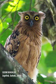 images of all owls | Owl is currently threatened by illegal hunting, due to a recently ...
