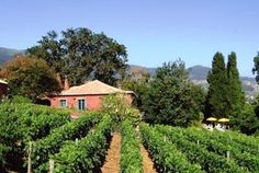 Vineyard for Madeira wine, Portugal. http://www.hideawayportugal.com/modules/property/listing-1040.htm