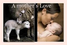 #veg #vegan. mother's love...no difference except the one you have created in your mind.