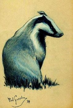 The Badger by the Belgian artist Paul Gosselin - Pastel drawing - Style:Realism 1987
