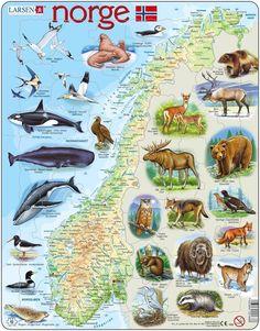 - Norway Physical with Animals (Norwegian) Norway Map, Norway Travel, Norway Roadtrip, Lofoten, Tromso, Oslo, World Thinking Day, Lappland, Scandinavian Countries