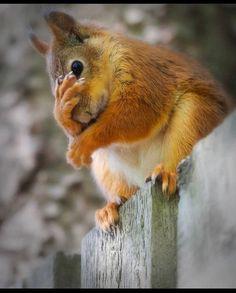 Cute Funny Animals, Cute Baby Animals, Cute Cats, Rare Animals, Animals And Pets, Image Zen, Cute Squirrel, Squirrels, Animal Magic