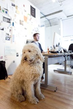 Meet Eli, the dog keeping everybody at coworking space The Coop in line.