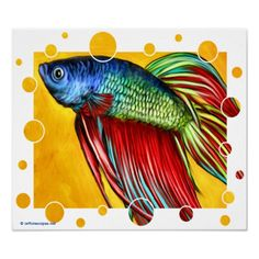 Betta Other with Fighting Fish | betta fish or siamese fighting fish is from one of my original ...