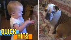 Cutest Argument EVER Erupts Between Toddler and English Bulldog – Fun Time Funny Animal Videos, Videos Funny, Funny Animals, Cute Animals, Viral Videos, America's Funniest Home Videos, America Funny, Dog Stories, Baby Makes