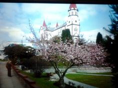 We visited Puerta Varas, Chile and were fortunate to visit while Spring was in full bloom.