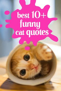 We all love our cats. Their unique personalities and behaviors lead to some wonderful cat quotes.We've collected a list of funny cat quotes. Lets Enjoy!  #funnycatquotes #ilovecat #cats #funnyquotes Cat Love Quotes, Funny Quotes, Kitten Cartoon, In Ancient Times, Animal Quotes, Cool Cats, Cats And Kittens, Funny Cats, Cute Pictures