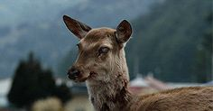 Train to Busan Deer - I am watching this now. The deer comes in at the end of the first scene. Real Life Zombies, Deer Meat, Country Music Videos, Film Grab, Mule Deer, Tumblr, Zombie Apocalypse, Busan, Best Funny Pictures