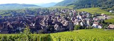 "Riquewihr in Alsace - ""maybe the most romantic medieval city in Alsace, is hidden among vineyards and Vosges mountains"""