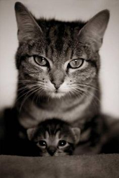 what a pretty mama cat with her kitty!