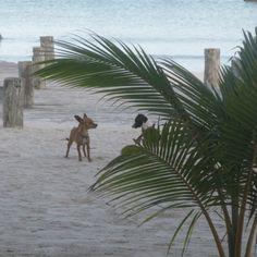Isla Holbox , Mexico.... Island Dogs!