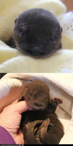 Newborn Otter Pup!