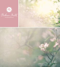 Fine art floral photography created by DiAnna Paulk, a professional photographer in Montgomery Alabama.