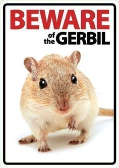 Magnet & Steel Beware of The Gerbil Plastic A5 Sign.  Add an S