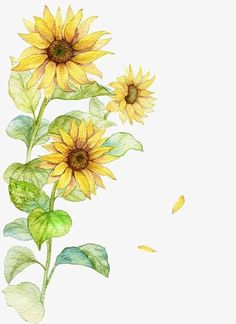 Watercolor sunflower, watercolor clipart, sunflower clipart, creative sunflower png image and clipart Sunflower Clipart, Sunflower Png, Sunflower Drawing, Watercolor Sunflower, Watercolor Flowers, Watercolor Art, Sunflower Illustration, Illustration Blume, Watercolor Wallpaper